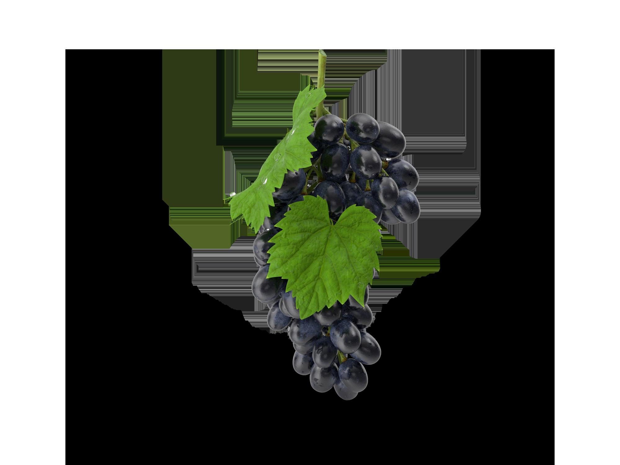 Weingut Lenartz - Das Weingut in Mesenich